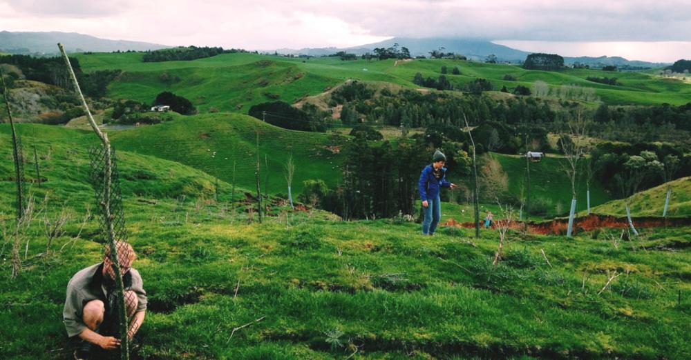 New Zealand Study Abroad - HECUA
