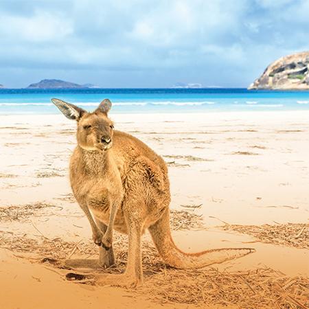 Australia II